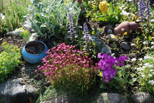Цветы на клумбу какие посадить
