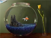 Что же необходимо для того чтобы завести и содержать дома аквариум, что необходимо для разведения рыбок
